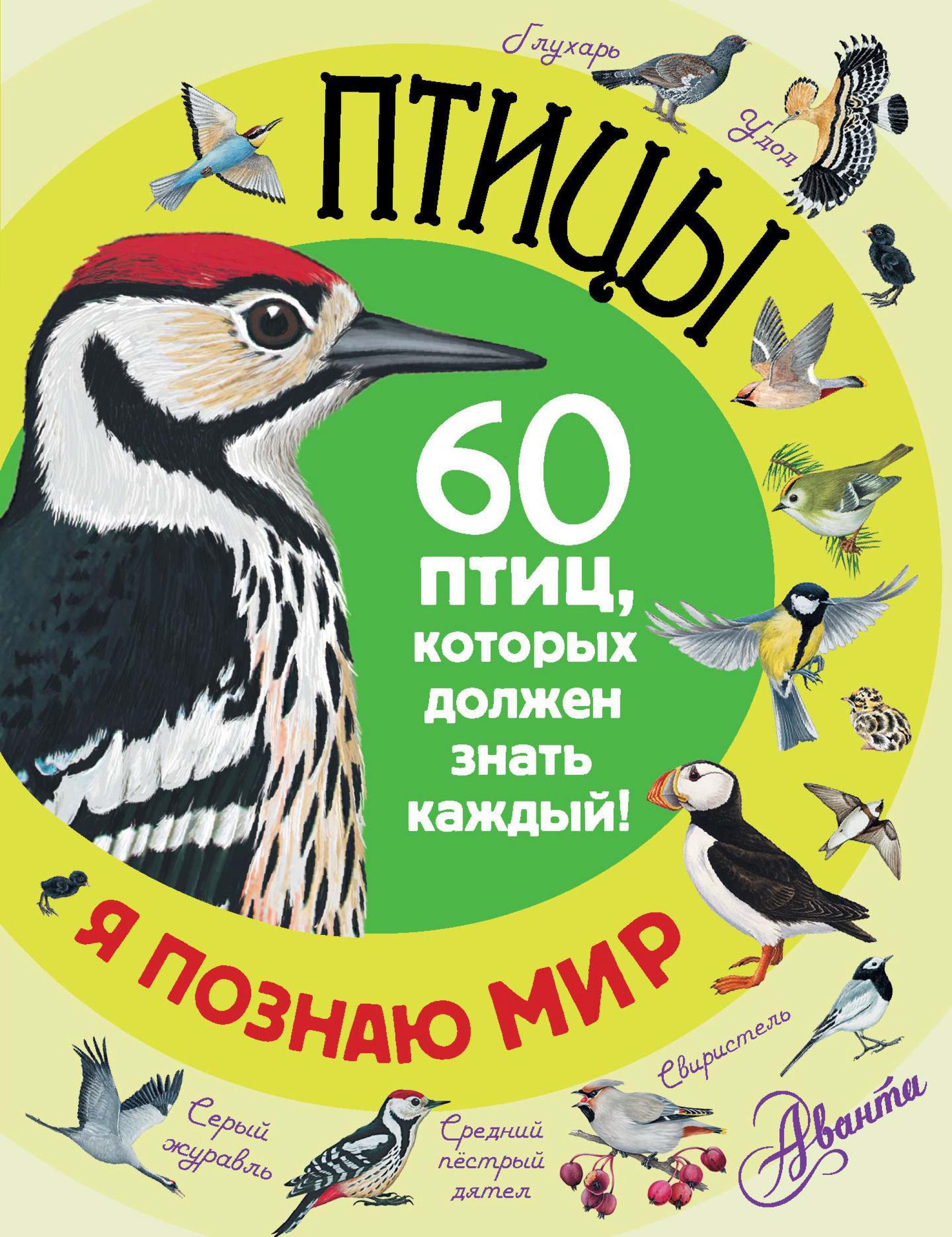 Отсутствует Птицы. 60 птиц, которых должен знать каждый отсутствует птицы 60 птиц которых должен знать каждый