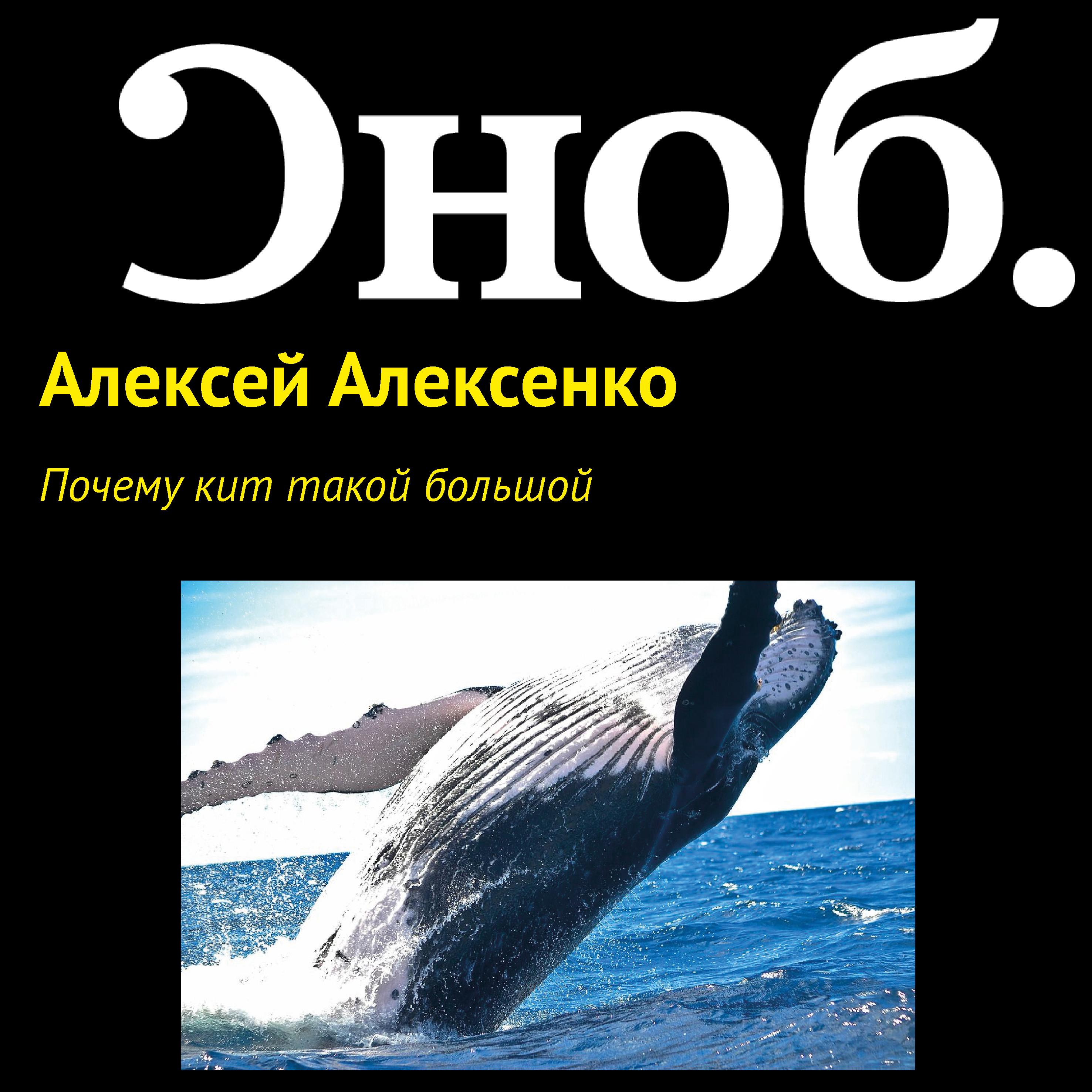 Алексей Алексенко Почему кит такой большой цена