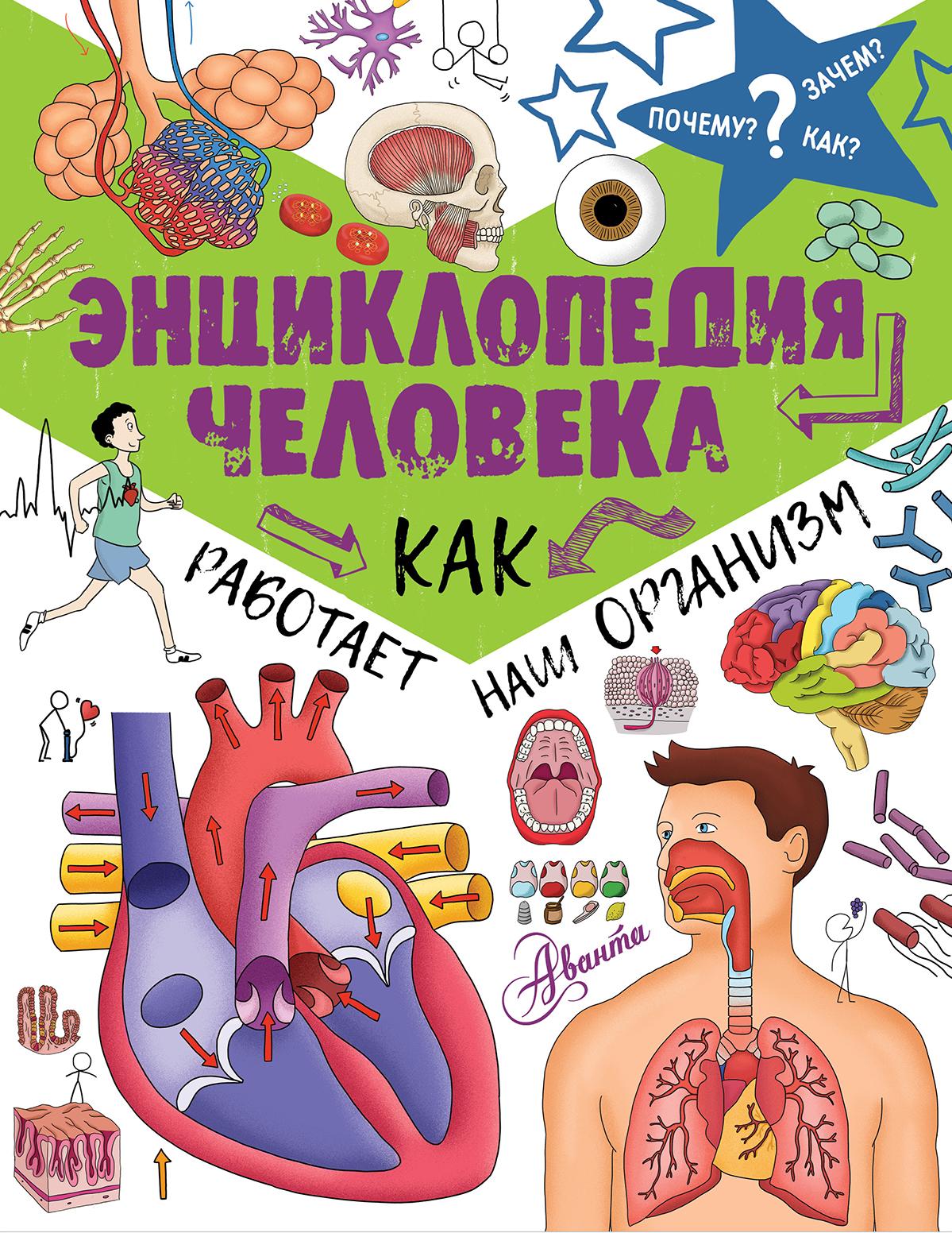 Отсутствует Энциклопедия человека. Как работает наш организм книги издательство аст энциклопедия человека как работает наш организм