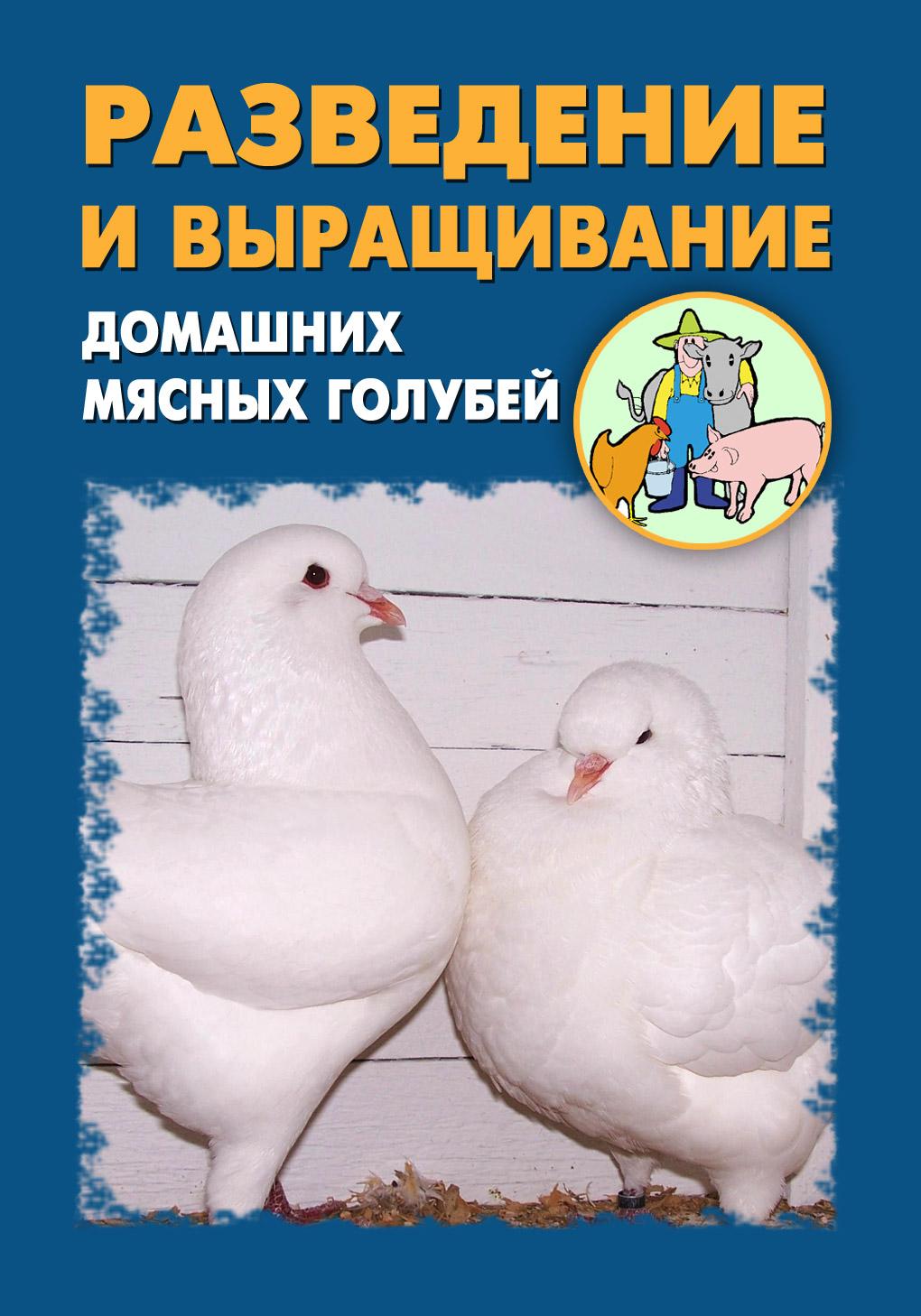 Илья Мельников Разведение и выращивание домашних мясных голубей илья мельников разведение и выращивание собак