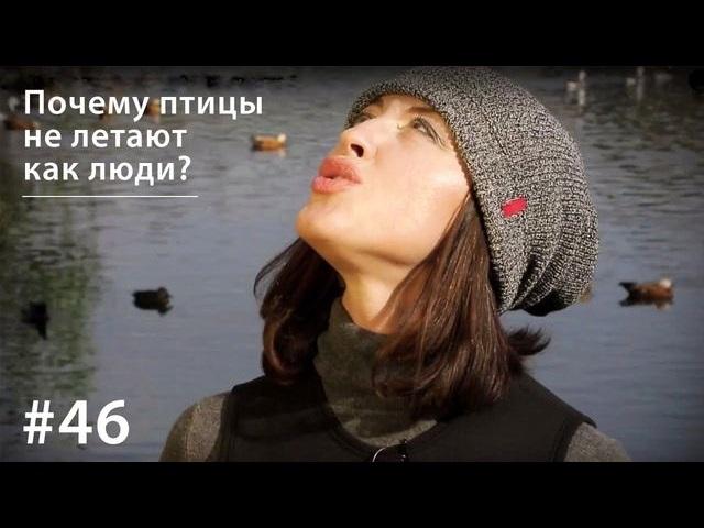 Евгения Тимонова Почему птицы не летают как люди?