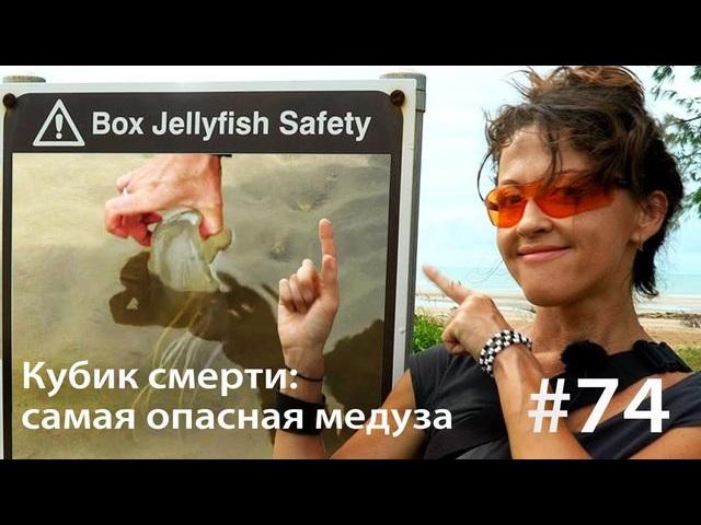 Евгения Тимонова Кубик смерти: как достать самую медузу (и выжить)