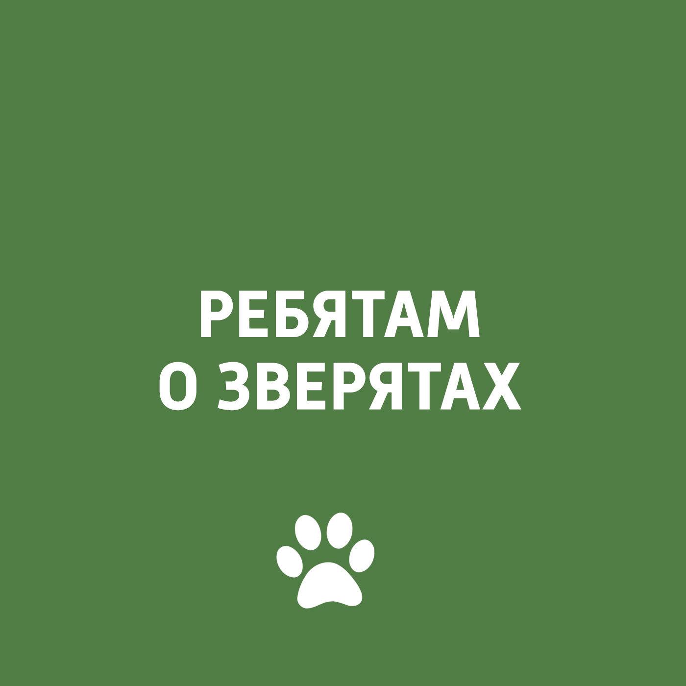 Творческий коллектив программы «Пора домой» Животные в неволе цена в Москве и Питере