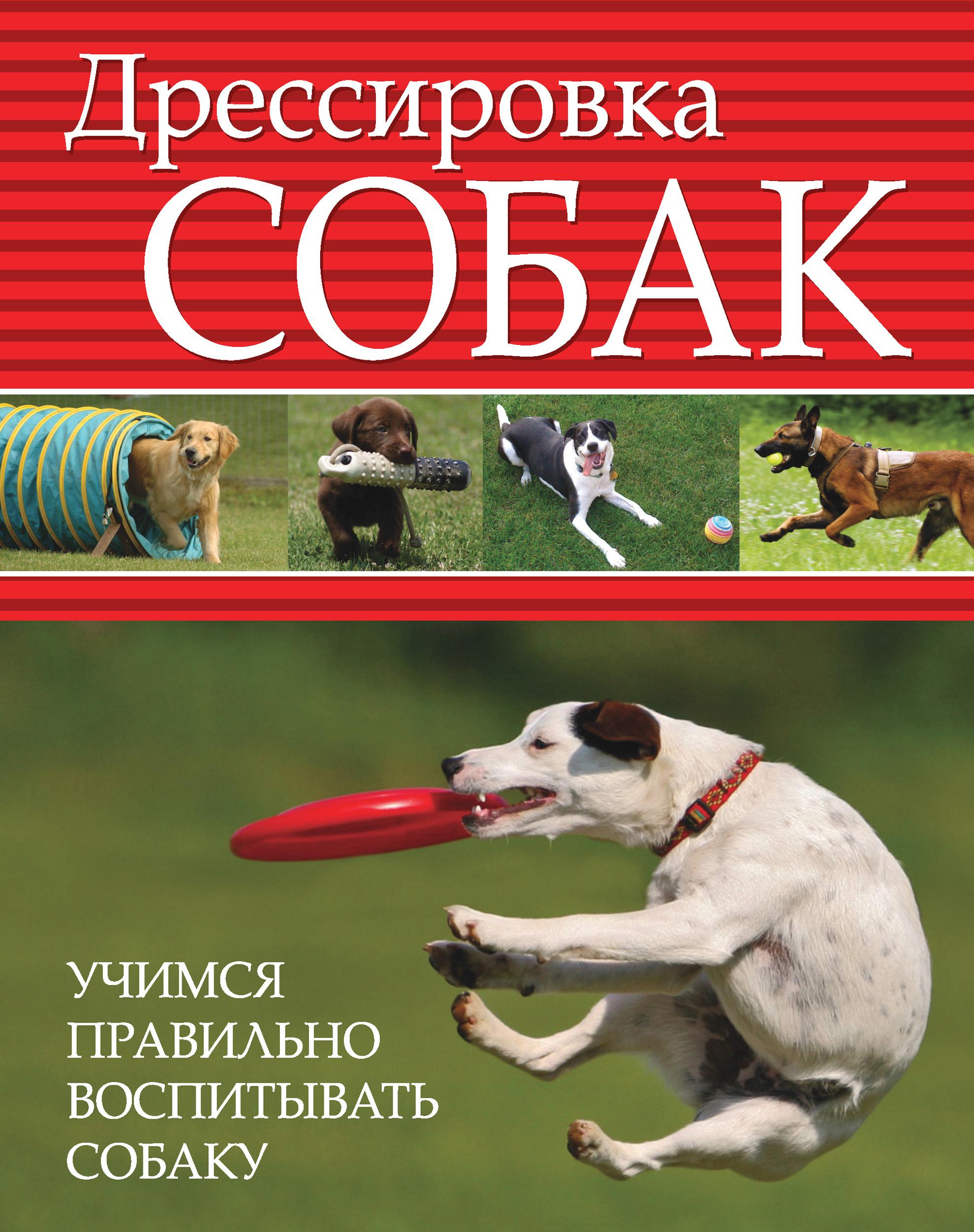 Отсутствует Дрессировка собак. Учимся правильно воспитывать собаку все о дрессировке собак
