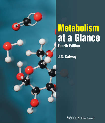J. Salway G. Metabolism at a Glance oxidation of sugars