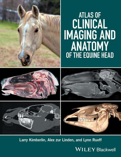 Larry Kimberlin Atlas of Clinical Imaging and Anatomy of the Equine Head the anatomy of dance discourse