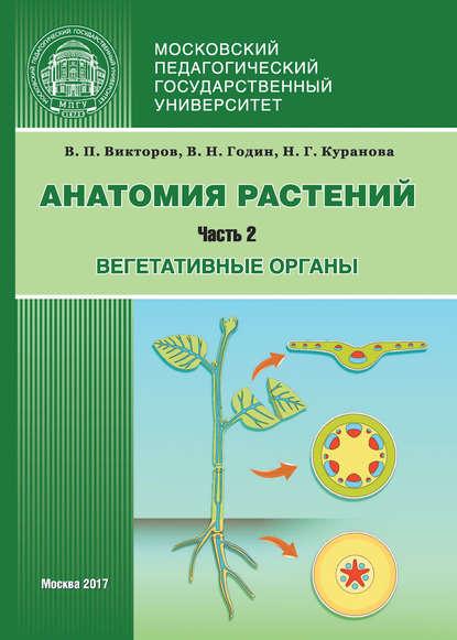 Фото - Наталия Куранова Анатомия растений. Часть 2. Вегетативные органы дашко и ред анатомия и йога