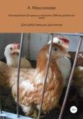 Как вырастить 52 курицы и получить 1560 яиц на даче за лето. Для работающих дачников
