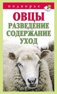 Овцы. Разведение. Содержание. Уход