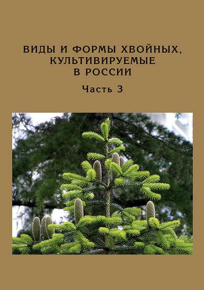 Обложка «Виды и формы хвойных, культивируемые в России. Часть 3. Abies Mill., Chamaecyparis Spach»
