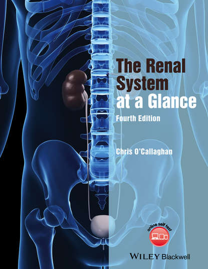 Обложка «The Renal System at a Glance»