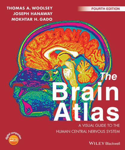 Обложка «The Brain Atlas. A Visual Guide to the Human Central Nervous System»