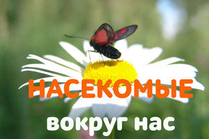 Обложка «Анафилактический шок от укуса, или Чем может грозить знакомство с насекомыми?»
