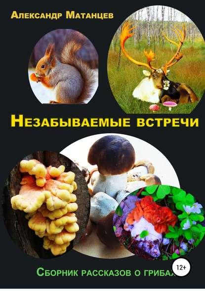 Обложка «Незабываемые встречи. Сборник рассказов о грибах»