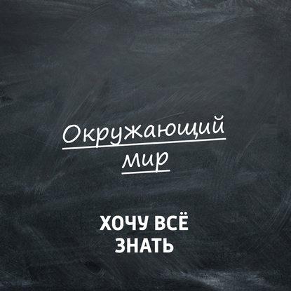 Обложка «Какие научные исследования можно провести летом?»