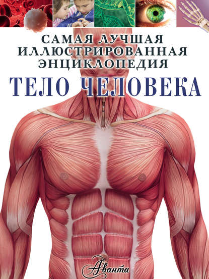 Обложка «Тело человека»